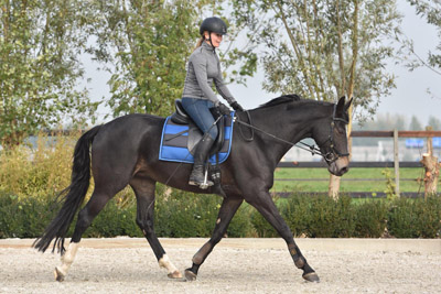 Equicare plus 4dimension dressage alexandra