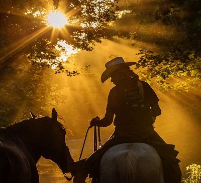 Irene smeets kalmeringssignalen bij paarden western