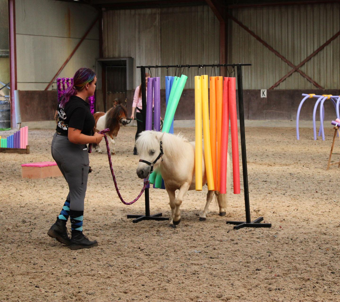 Kristy Winckelmans my little ponies horse agility