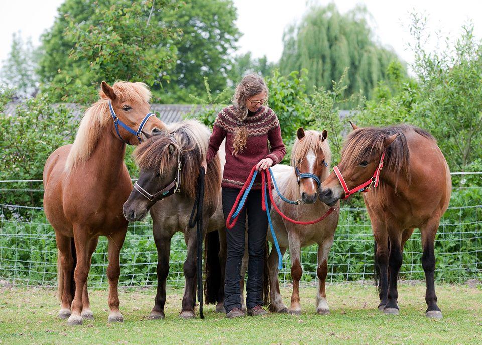 Selma Snel paardrijden op maat paardvriendelijke kinderles