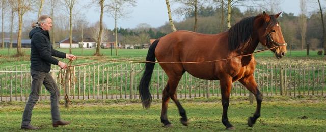 Wout Overbeeke paard aan de lange teugels